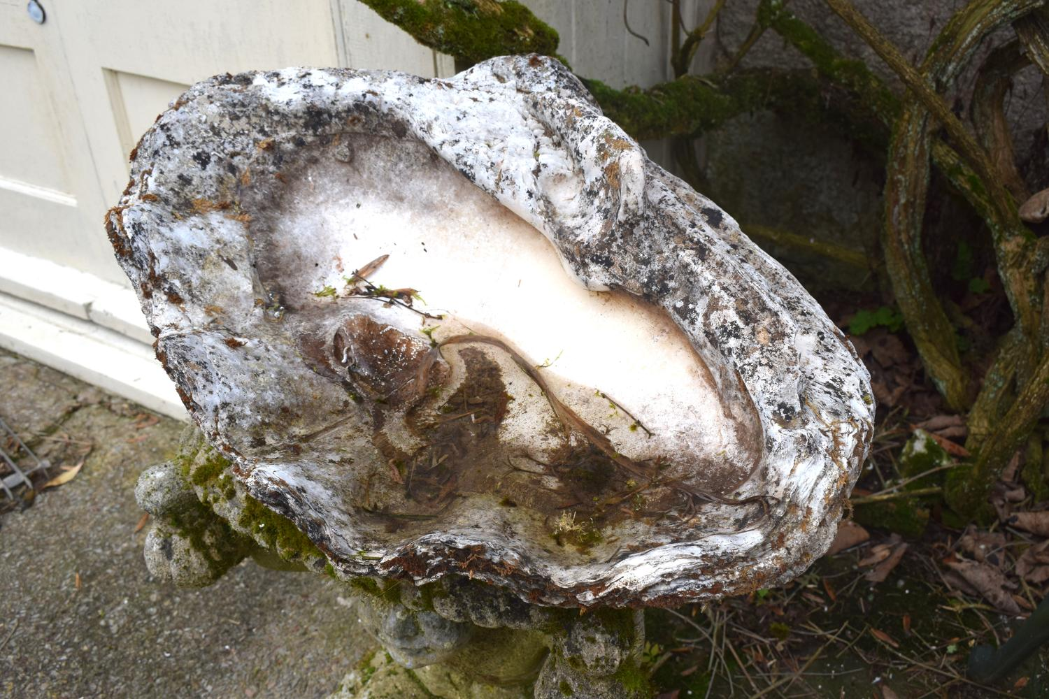 A calcified giant clamshell